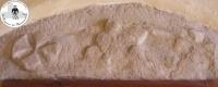 Il più antico stemma dei Montecuccoli. XII- XIII sec.